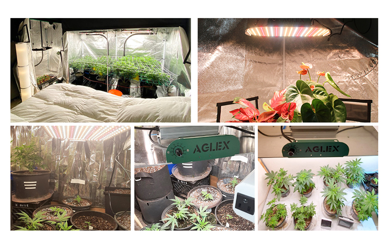 grow light for seeds and flowering