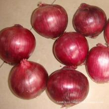 Proveedor grande de la cebolla roja fresca de la calidad superior 4-7cm
