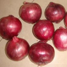 Fornecedor grande da cebola vermelha fresca da qualidade superior de 4-7cm