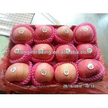 Shandong fuji pomme prix