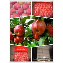 2015 Chinesisch exportieren Standard Red Star Apple