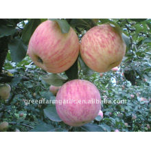 Mähdrescher goldenen köstlichen Apfel Hina Fuji Apfel Preis