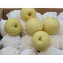 Centurial pear (white)