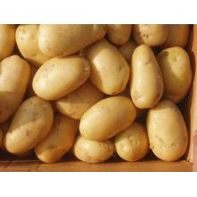 New Fresh Golden Potato