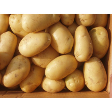 Patata fresca nueva temporada 2015