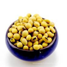 Soja de soja jaune sans OGM pour l'alimentation animale de tofu d'huile