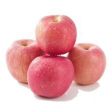 fresh fuji apples  China fuji yantai fuji