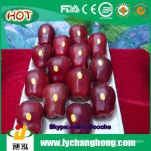 Cheap Apple Fruit/Fresh Red Apples
