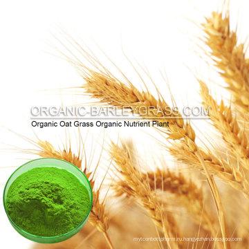 Сертифицированный USDA органический порошок овсюг