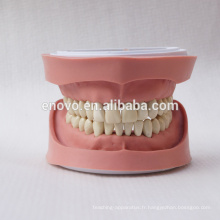 Type anatomique dentaire modèle standard 13004 de dents de K amovibles