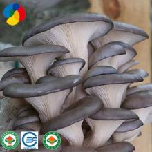 Vente la plus chaude d'apparition de champignons d'huîtres