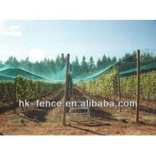Malha do inseto da agricultura / rede de malha da árvore de fruto