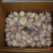 Hot Sale White Garlic in Large Quantity