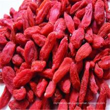 China Dried bulk Goji Berry medlar fruits for sale