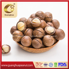 Best Quality Healthy Sweet Delicious Tasty Cheap New Crop New Fragrance Macadamia in Shell