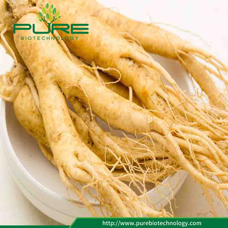 High Quality 100 Pure White Ginseng Root1
