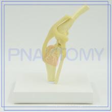 Modèle anatomique de dissection de chien de haute qualité de PNT-0877 à vendre