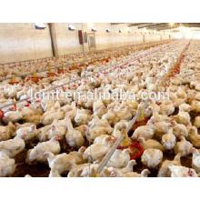 Système automatique d'alimentation de poulets de chair de ferme de volaille de poulet