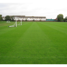 Bermuda grass seeds for sports turf