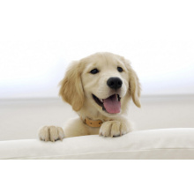 (Ivermectin) -Veterinary Drugs, Resistant to The Parasite Ivermectin