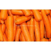Exportation de nouvelles carottes naturelles