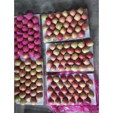 Manzanas frescas QinGuan