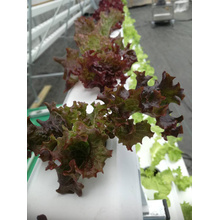 Systèmes de culture hydroponique vertical tower garden NFT channel