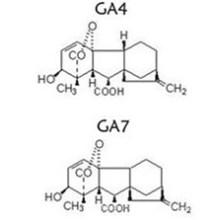 Ga 4 + 7 Ácido Gibberelico