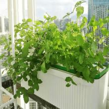lndoor Hidroponía automática para planta