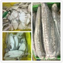 Frutos do mar de fábrica congelados oilfish steak