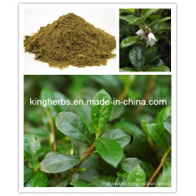 Fig Leaf Extract, Olive Leaf Extract, Bilberry Leaf Extract
