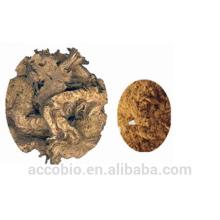 Approvisionnement d'usine en gros 100% naturel noir Cohosh poudre d'extrait Triterene Glycosides 2,5%