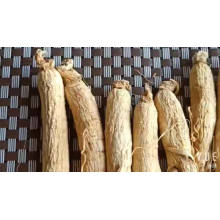 Free Sample Root Price  Panax Ginseng Root Drink Ginseng