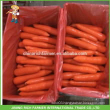 Special New Crop Red Carrot