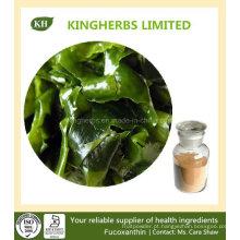 Perda de peso Brown Alga Extract Fucoxanthin 5% ~ 20%, Fucoidan 85%