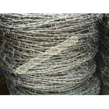 Barbed Wire (02)
