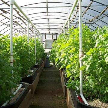 Long Life Prefabricated Simple Structure Tunnel Greenhouse