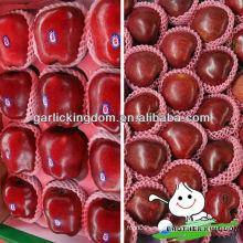 China Tianshui rojo fresco manzana Huaniu
