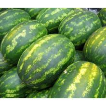 HW12 Waizu grande oval verde F1 sementes de melancia híbrida em sementes de hortaliças