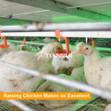 Poultry Automatic Drinker for Chicken Farm