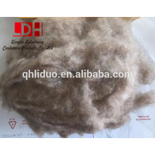 16/18mm length Brown dehaired cashmere fibre with 17.5 micron coarse fibre