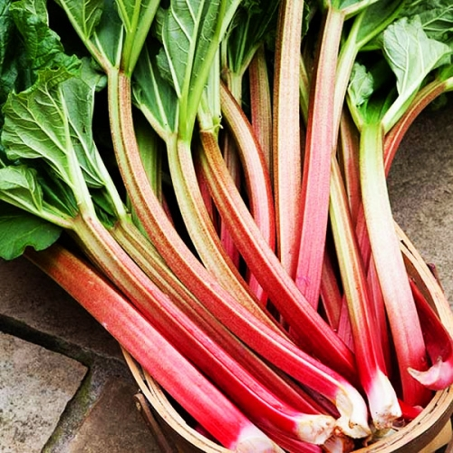 Fragrance Fresh Mint Rhubarb Nfmr