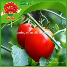 Cereza dulce Tomate bajo en calorías frutas saludables en el mercado