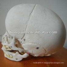 Modèle ISO Skull Infant, crâne anatomique
