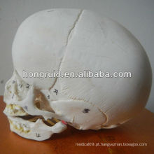 Modelo de crânio infantil ISO, crânio anatômico