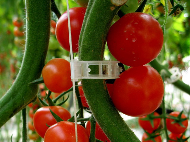 Tomato-Clips-Vine-Garden-Trailing-Vegetables-plants-Hanging-clips-6