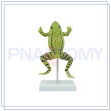 PNT-0820 modèles anatomiques de haute qualité des animaux Hot Educational Toys Preschool