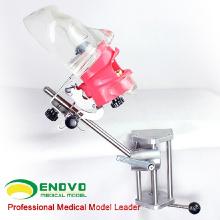 VENDA 12561 Tabela Phantom Head Tooth Preparar Modelo de Prática