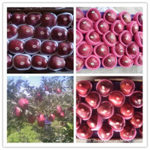 Red Delicious Apple / Frische Huaniu Apfel