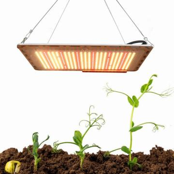 LED Grow Light Hydroponic con chips Samsung LM301B
